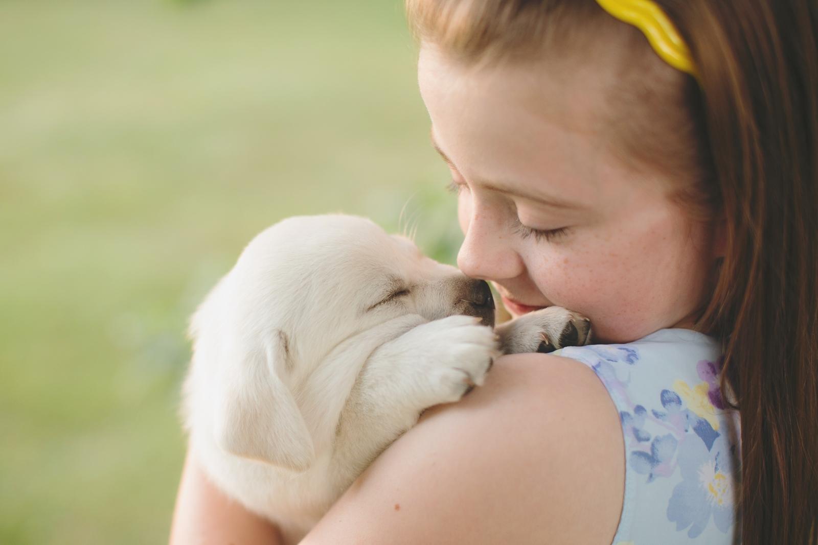 white labrador retriever pup