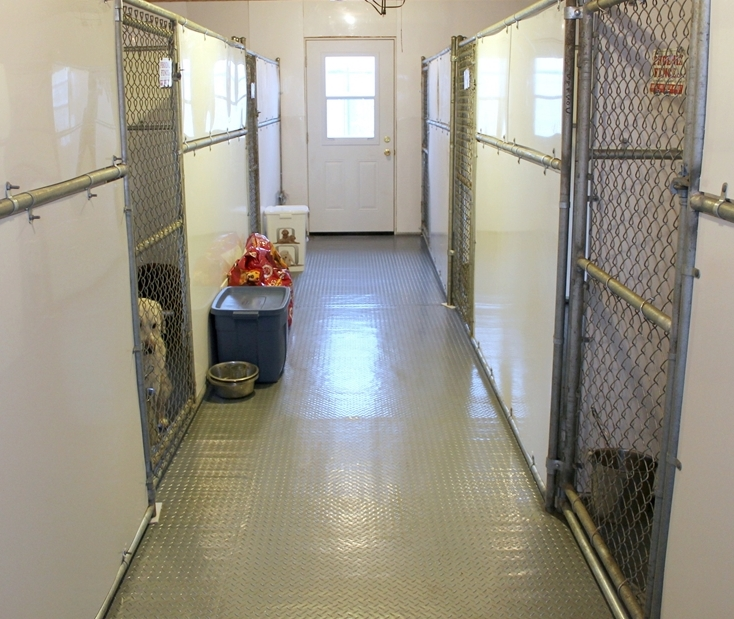 inside dog kennel