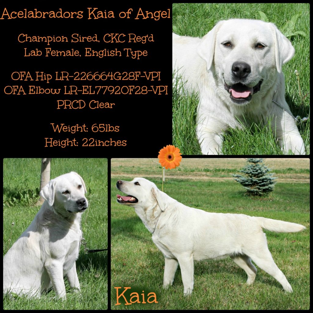 Kaia Collage