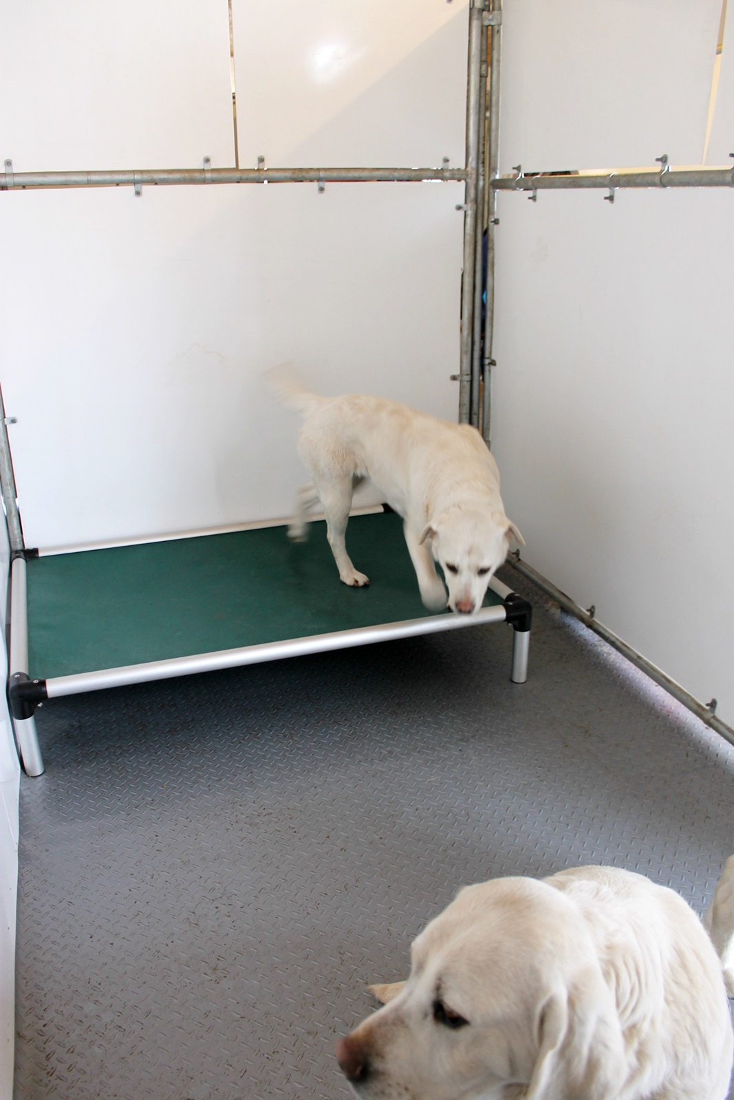 lab kennel