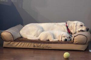 Buddy (LaceyxCasper) & Gwyn