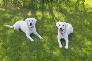 Stella & Daisy older